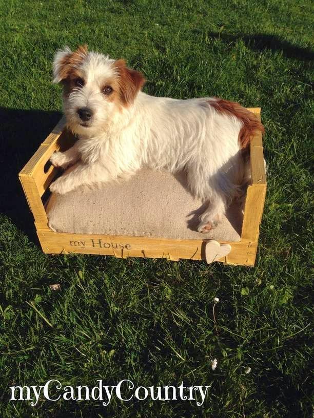 Top creare cuccia per cani o gatto, da una cassetta di legno  TG48